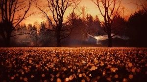 Autunno-Cottages-HD