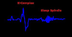 350px-Stage2sleep_new.svg