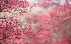 primavera-en-rosa-wallpapers_28574_2560x1600
