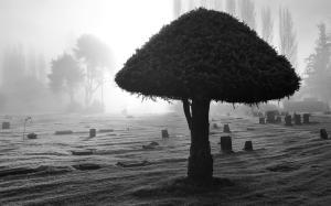 dark_horror_gothic_cemetary_grave_black_white_spooky_creepy_lfog_mist_mood_gallery