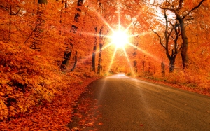 otoño-camino-wallpapers_31068_2560x1600